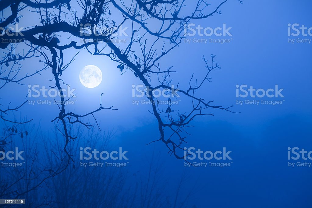 Eerie Blue Moon Through October Fog, Scarry Oak Tree Branches stock photo