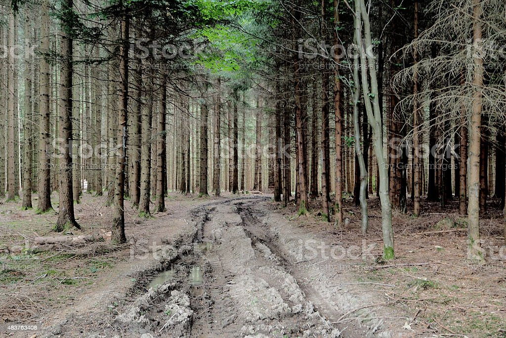 Eerie forest stock photo