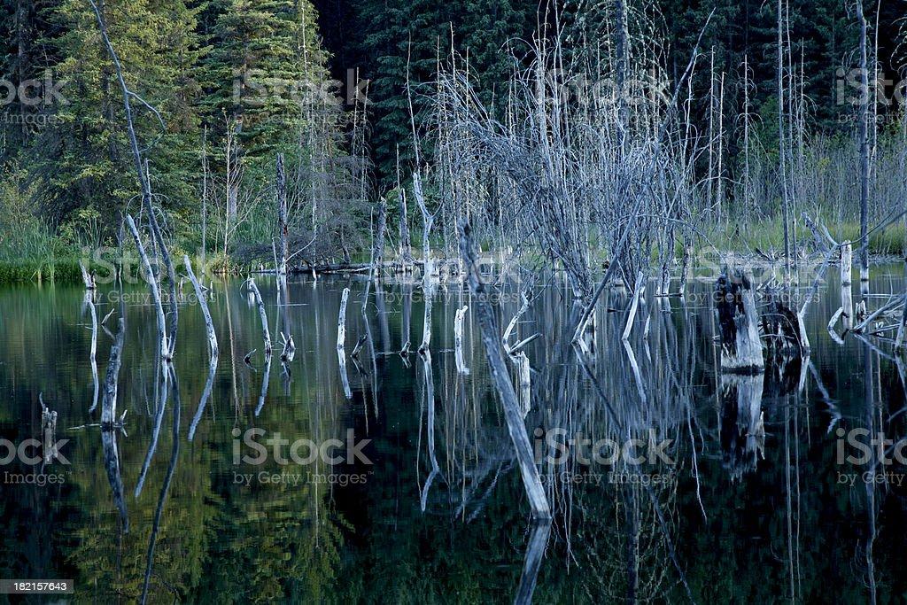 Eerie Pond That Looks Just Like Sleepy Hollow stock photo