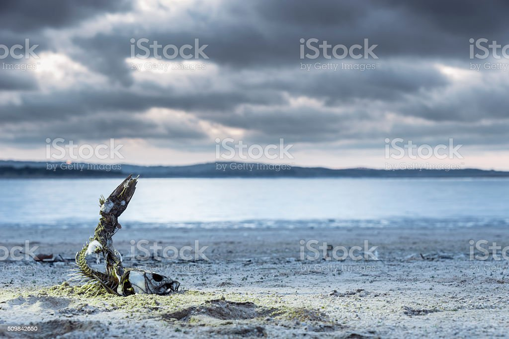 Effect of the drought stock photo