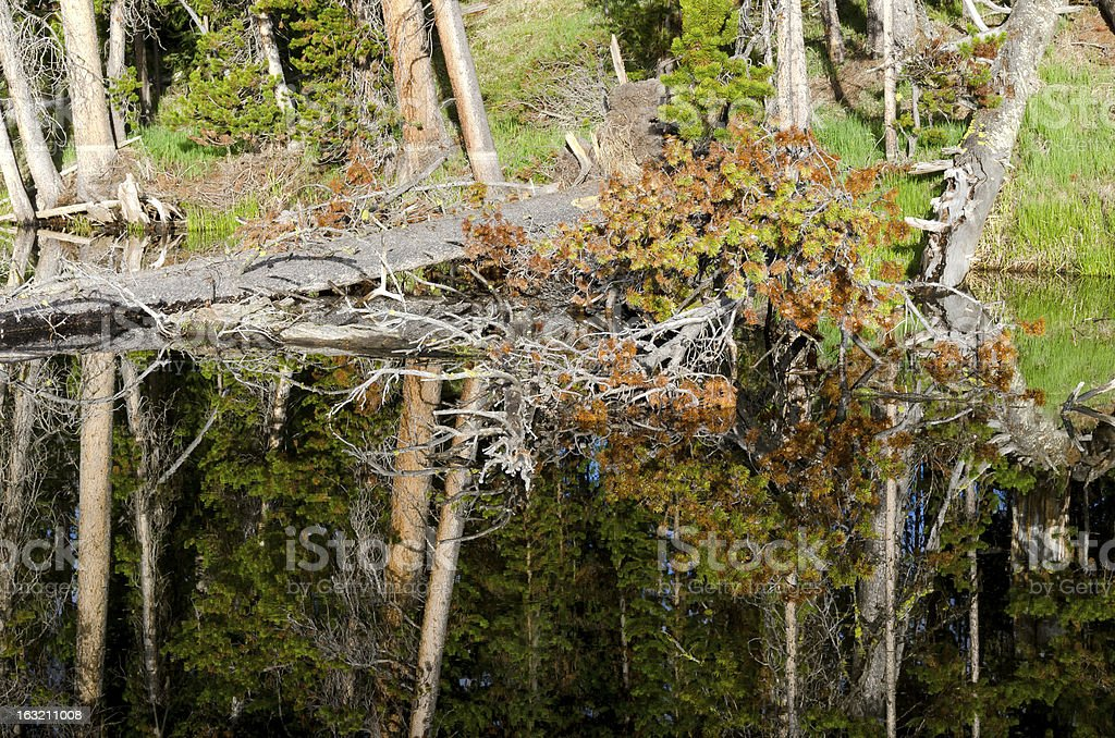 effects on Yellowstone Lake royalty-free stock photo