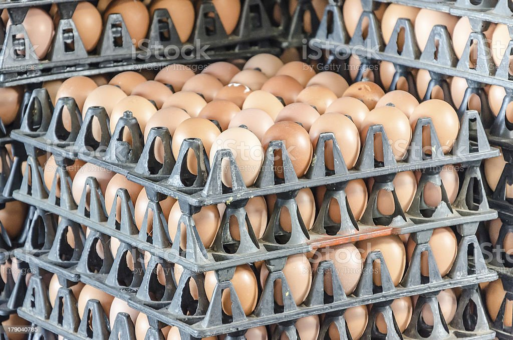 egg box in market royalty-free stock photo