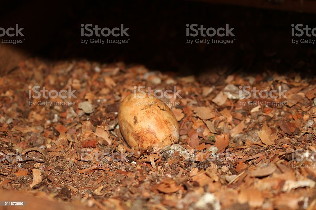 Egg chicken in the nest. Concept image stock photo