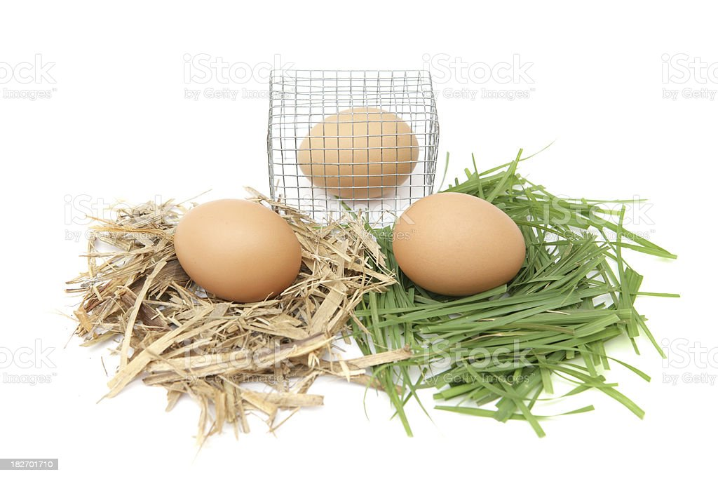 Egg Choices stock photo