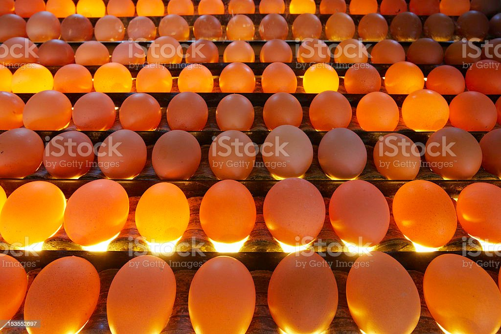 Egg factory royalty-free stock photo