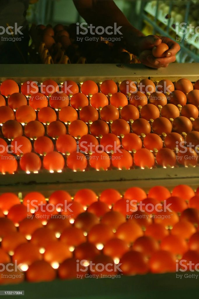 Egg factory stock photo