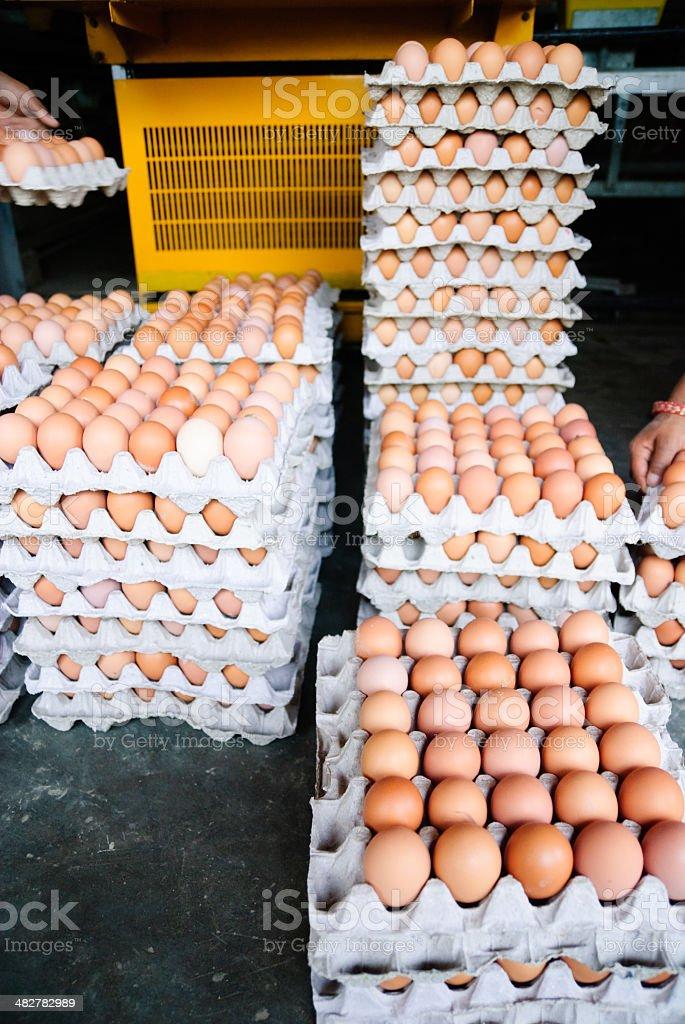 Egg factory royalty-free stock photo