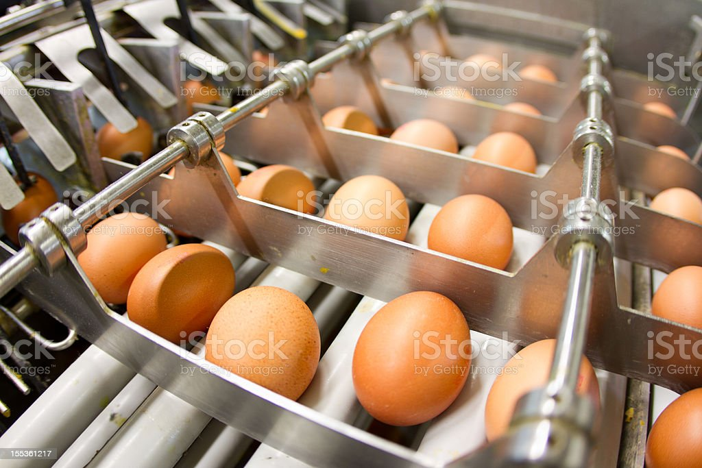 Egg factory...production line with fresh eggs royalty-free stock photo
