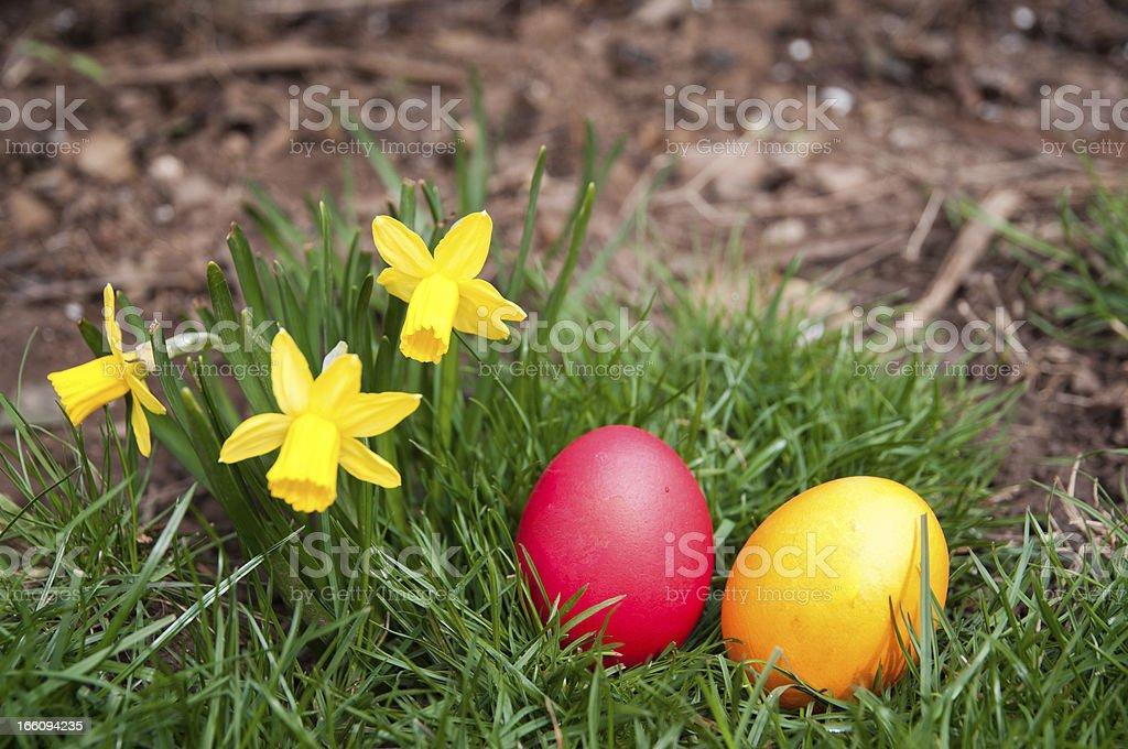 Egg hunt royalty-free stock photo