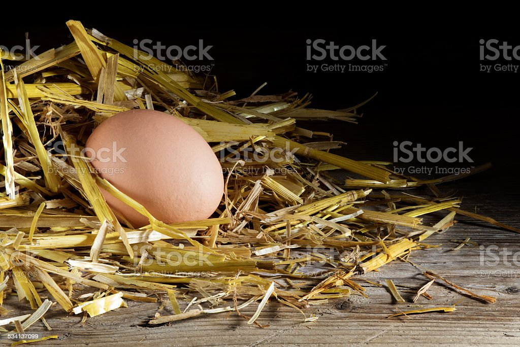 egg in a nest of straw on wood, dark background stock photo