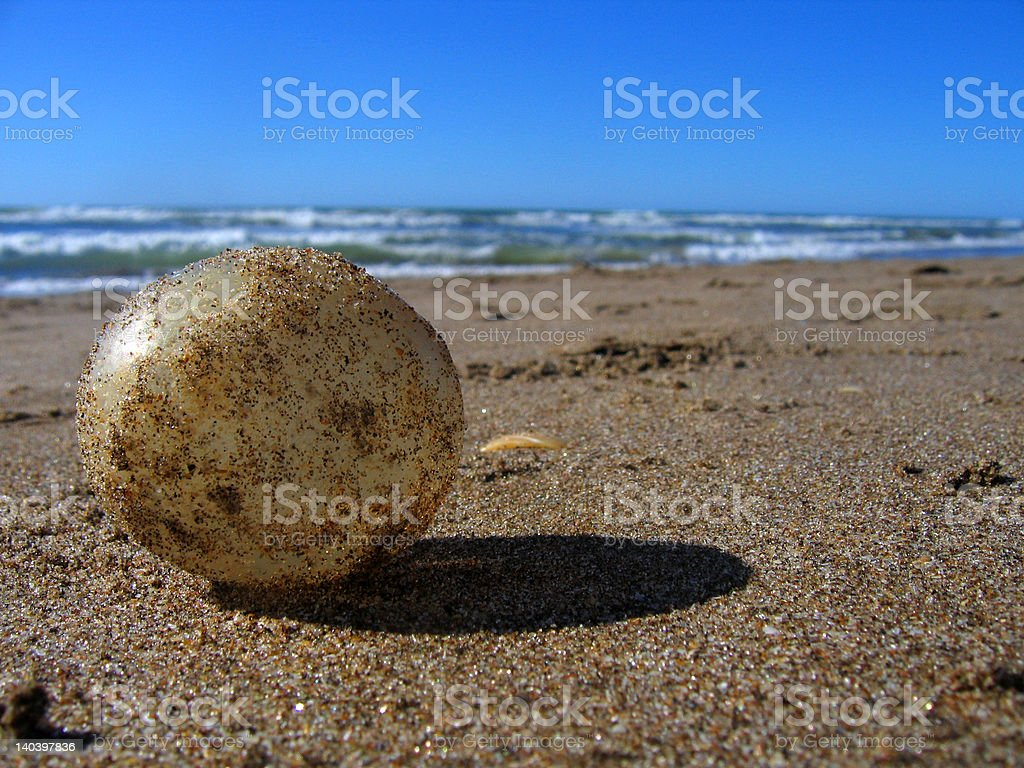 egg in the sand royalty-free stock photo