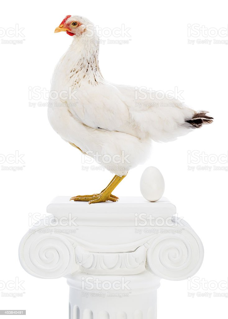 Egg laying champion hen royalty-free stock photo