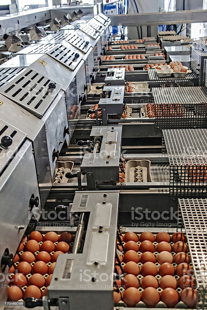 Egg packaging lines stock photo