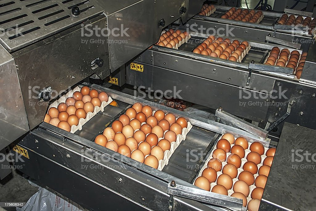 Egg packaging lines royalty-free stock photo