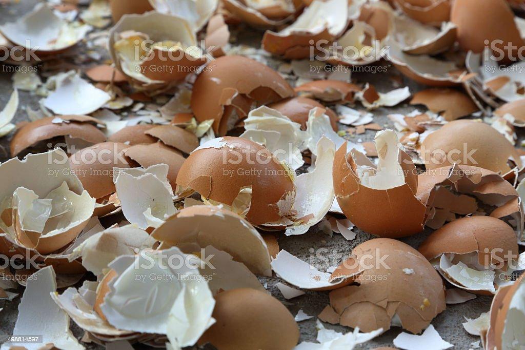 Egg Shells stock photo