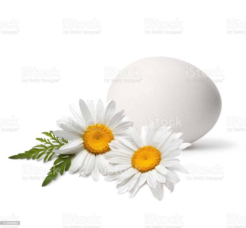 egg with flower stock photo