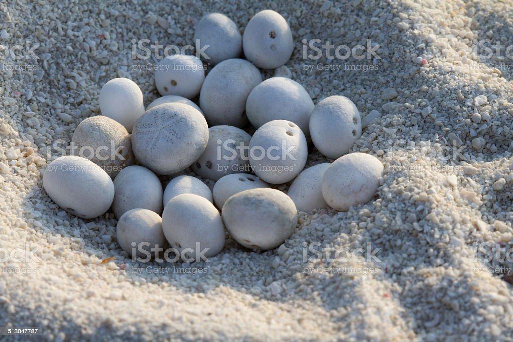 egg-laying stock photo