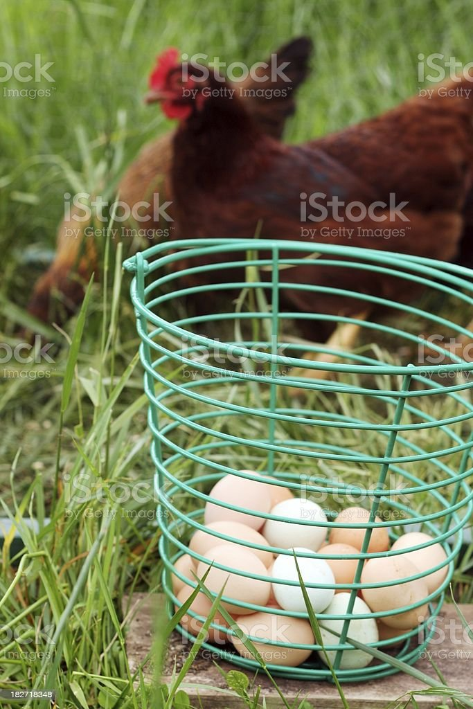 Eggs and Chickens stock photo
