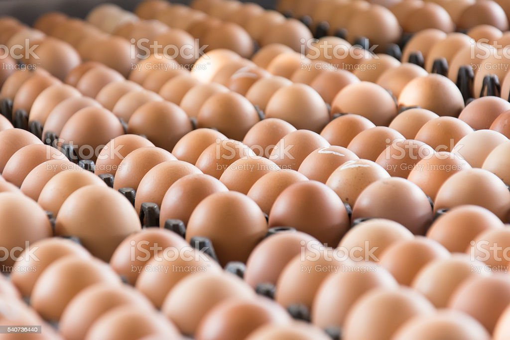 Eggs from chicken farm in the package stock photo