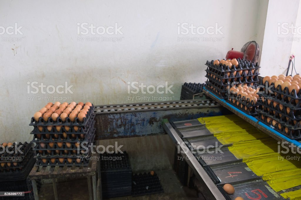 Eggs from hen farm in package and old weight scales machine for...