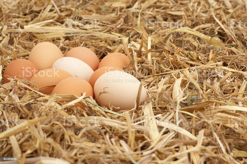 eggs in soft straw nest stock photo