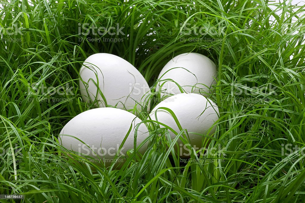 Eggs in the lawn royalty-free stock photo