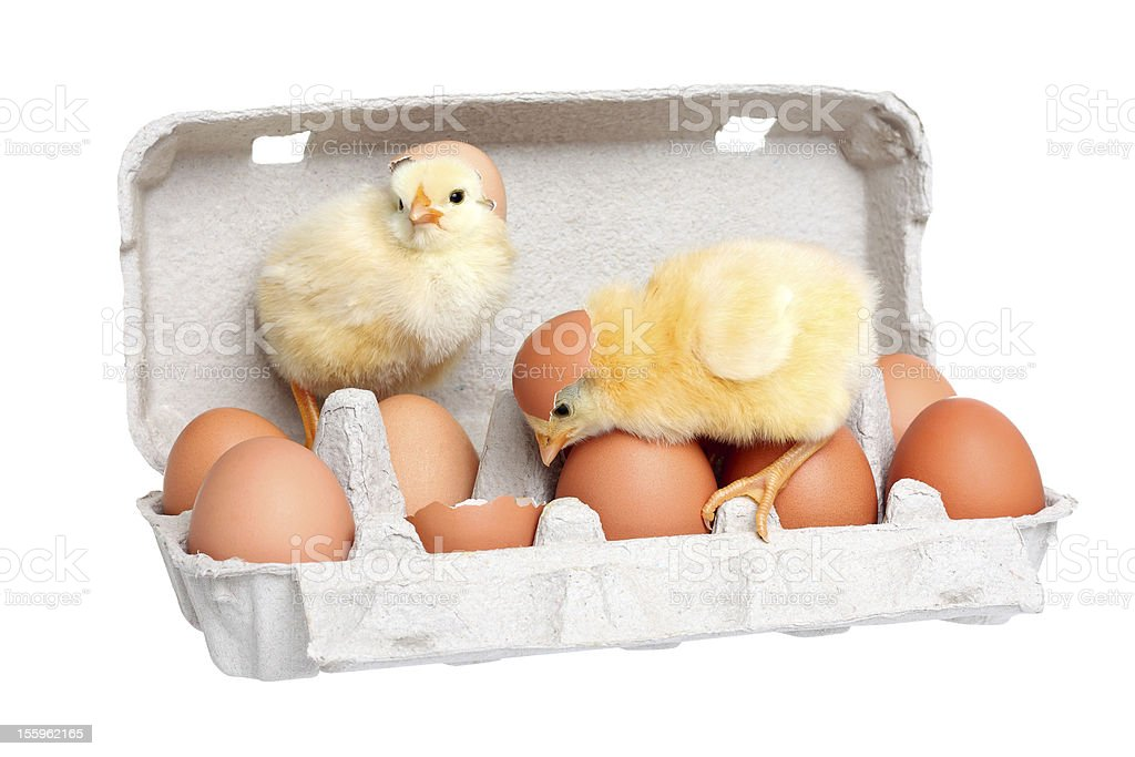 Eggs in the package with cute baby chick royalty-free stock photo