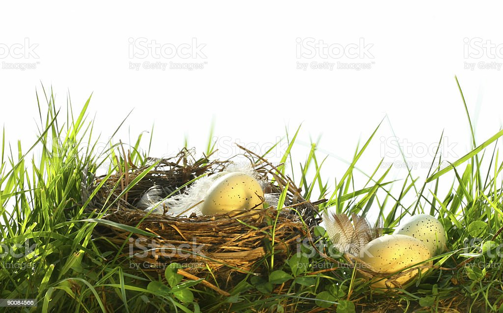 Eggs in the tall grass stock photo