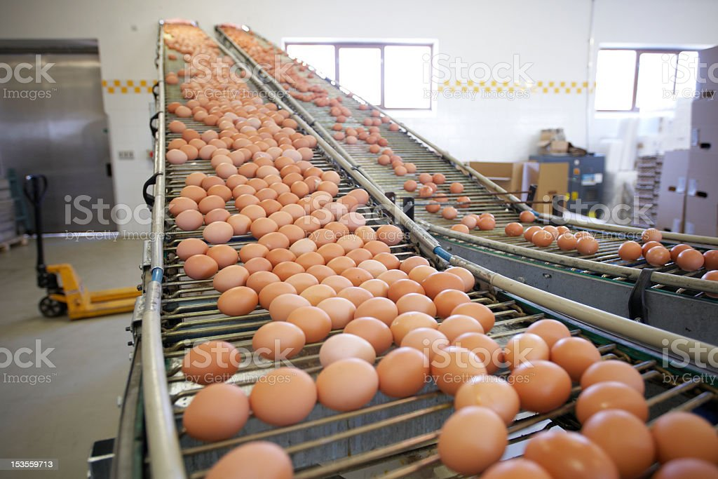 Eggs on factory running machine stock photo