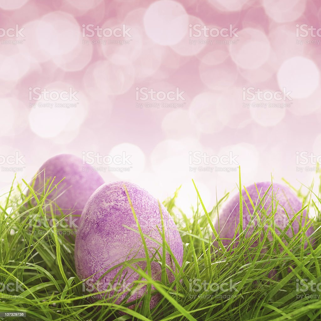 Eggs on the grass stock photo