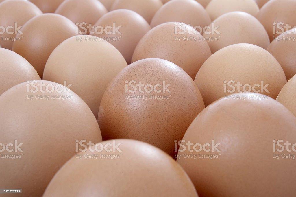 eggs open stock photo