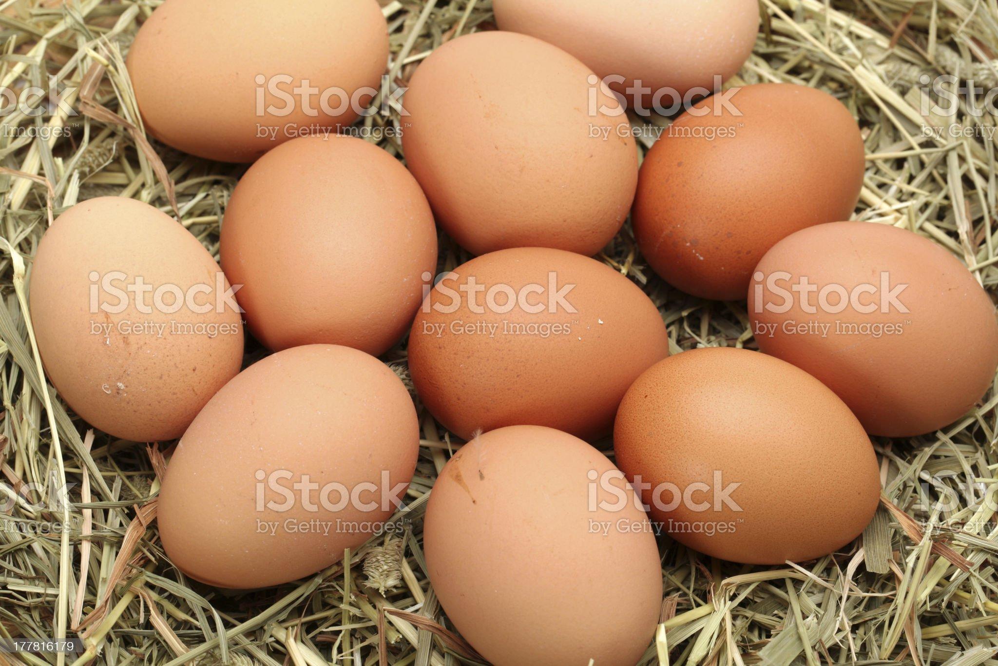 eggs royalty-free stock photo
