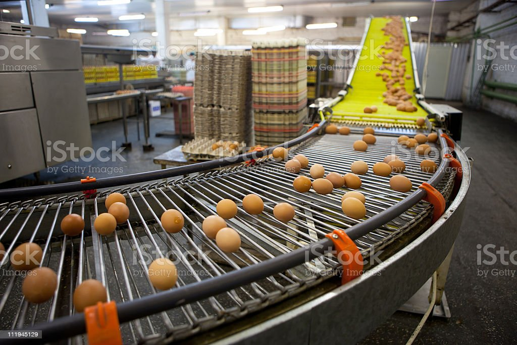 eggs production line stock photo