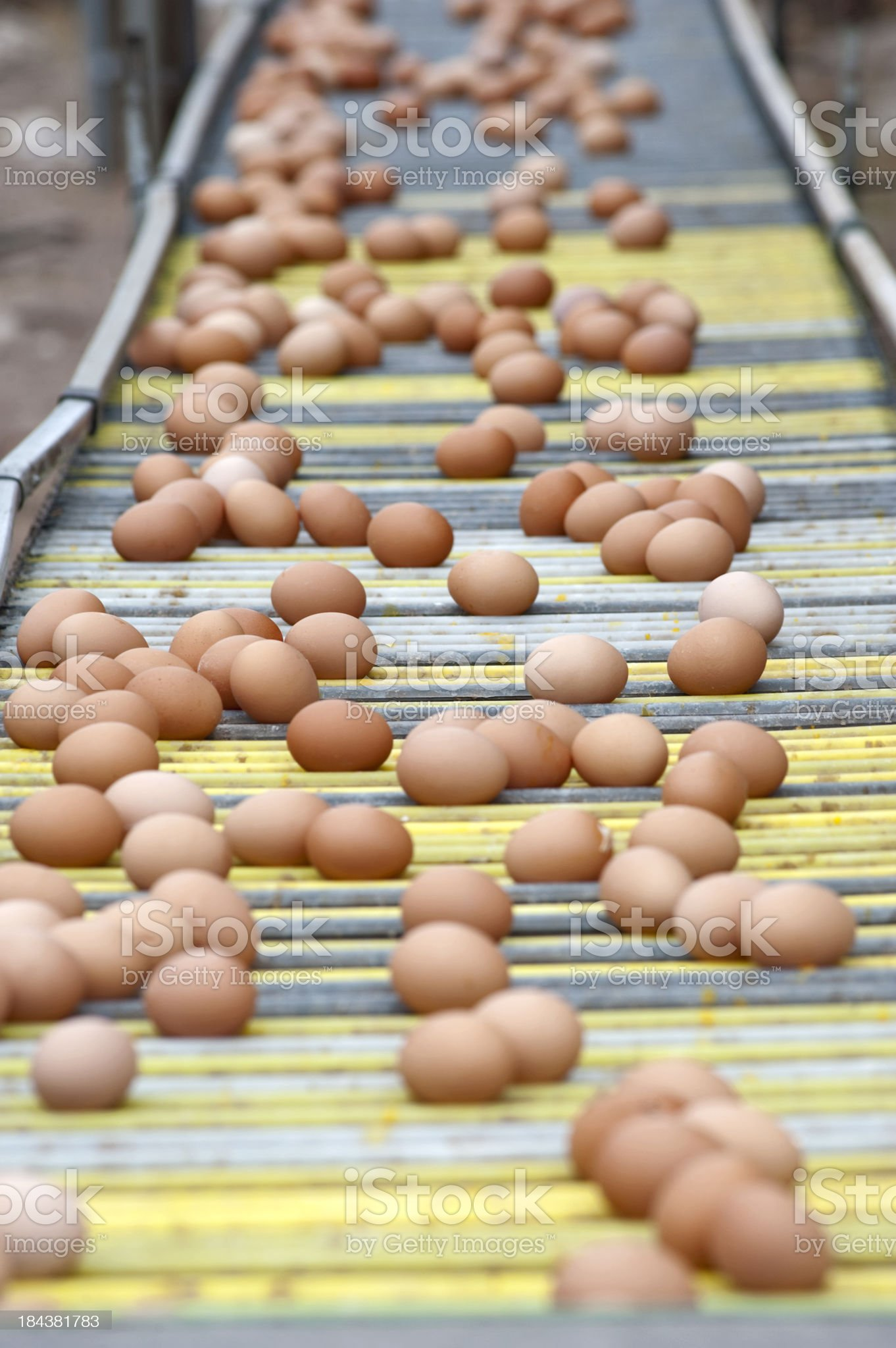 Eggs production line. royalty-free stock photo