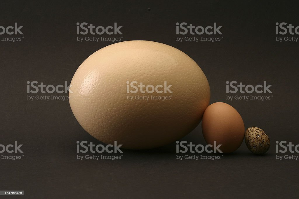 Eggs supporting one another royalty-free stock photo