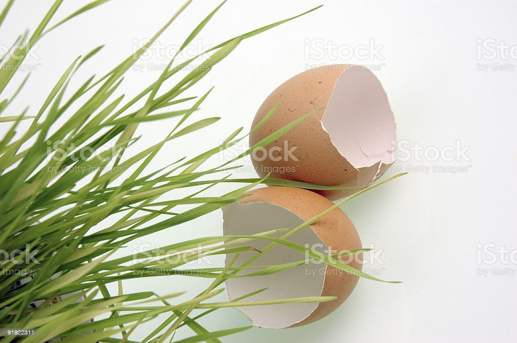 Eggshells and a grass. royalty-free stock photo