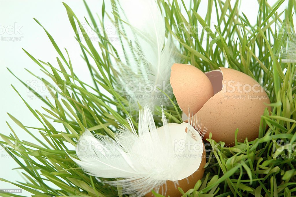 Eggshells royalty-free stock photo