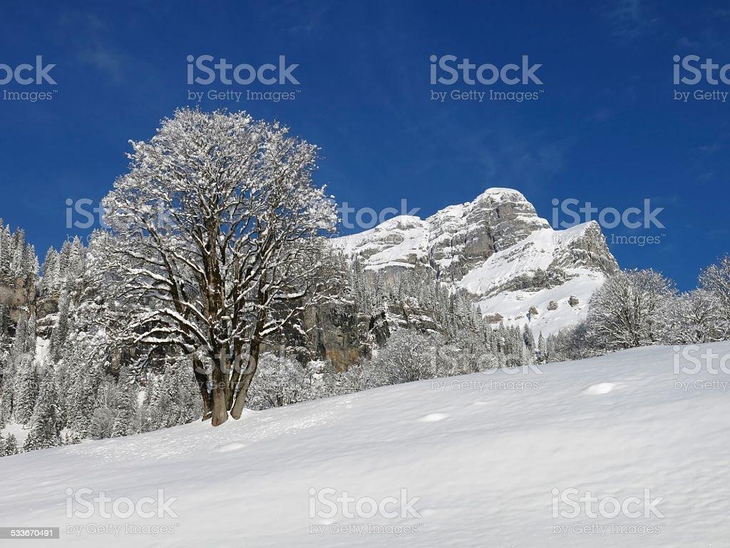 Eggstock and tree stock photo