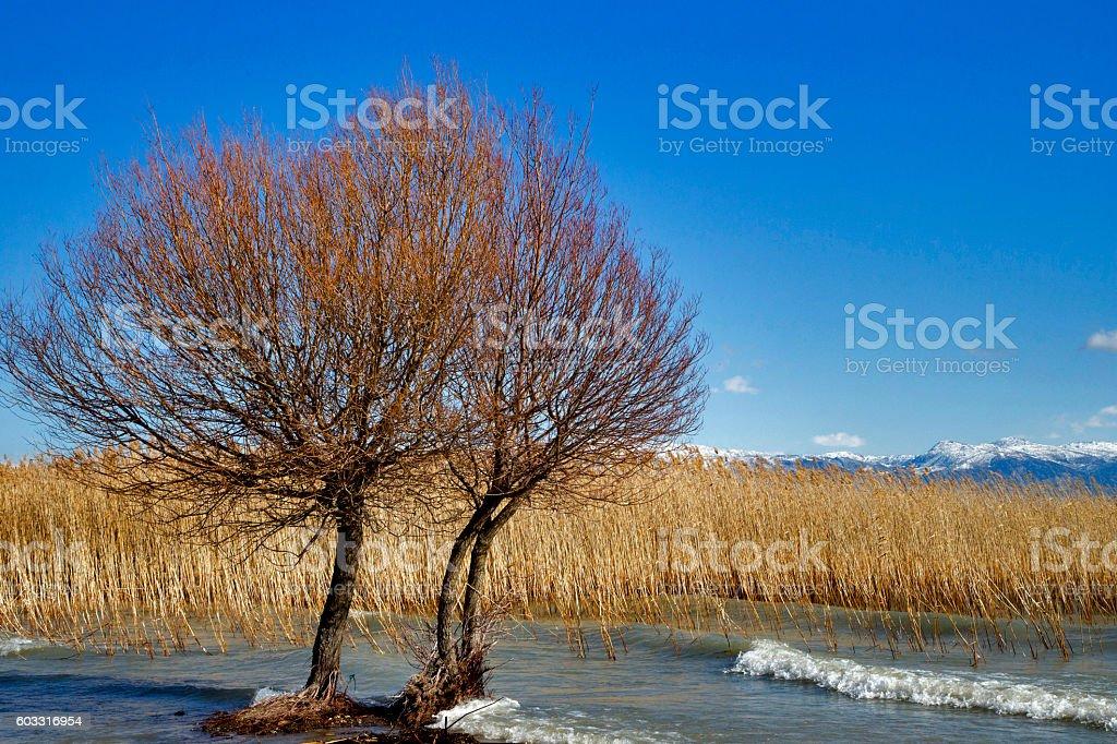 Egirdir Lake and reeds on delta area. stock photo