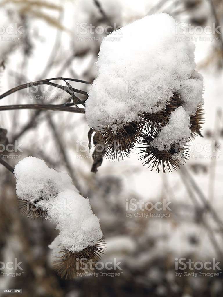 egret bush snow covered stock photo