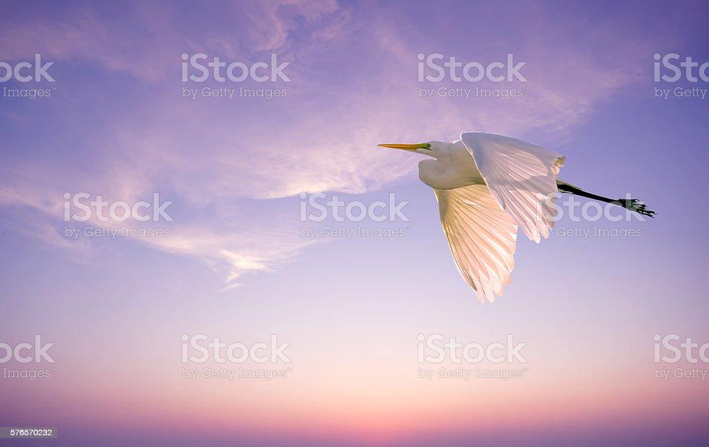 Egret with long beak and white feathers stock photo