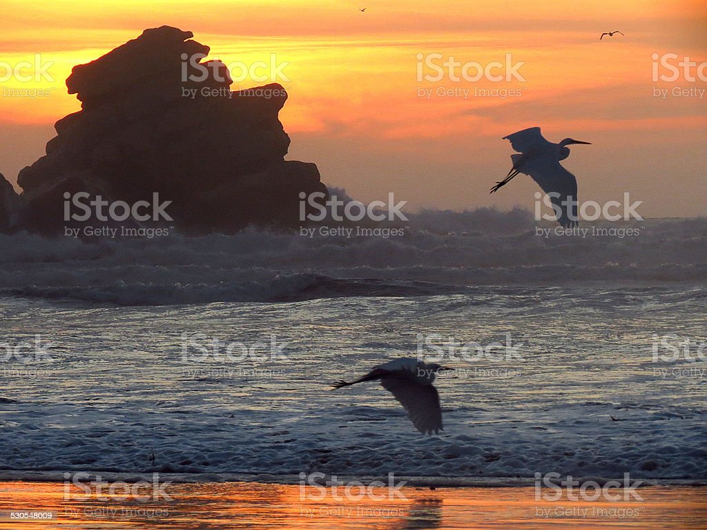 Egrets at Sunset royalty-free stock photo