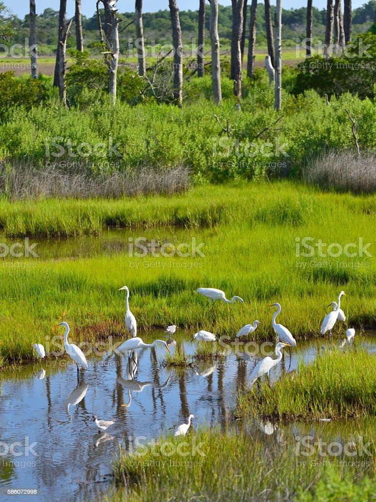 Egrets Sharing Marsh Pond stock photo