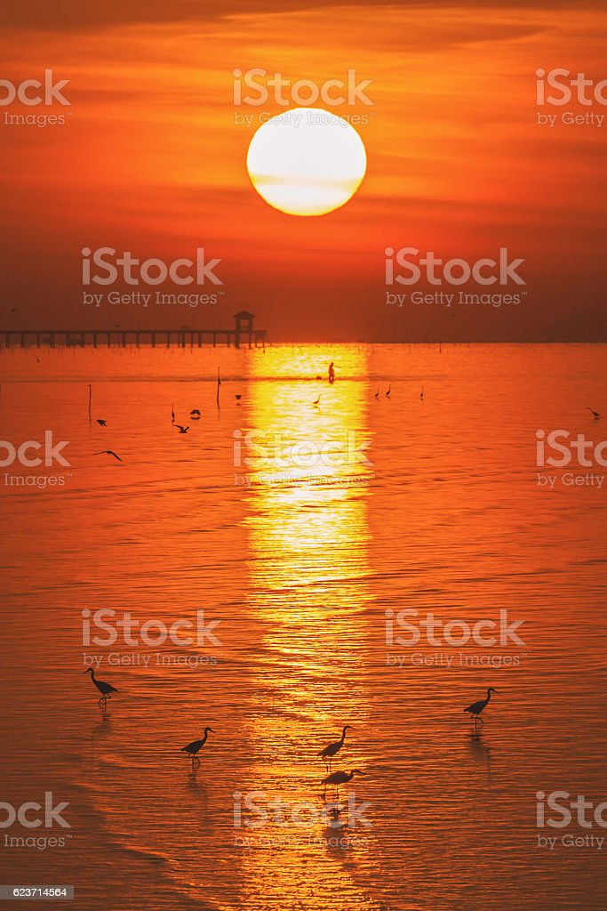 Egrets walking on water surface stock photo