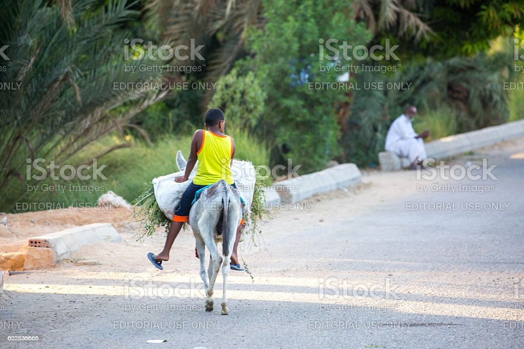 Egypt: Donkey Transportation stock photo