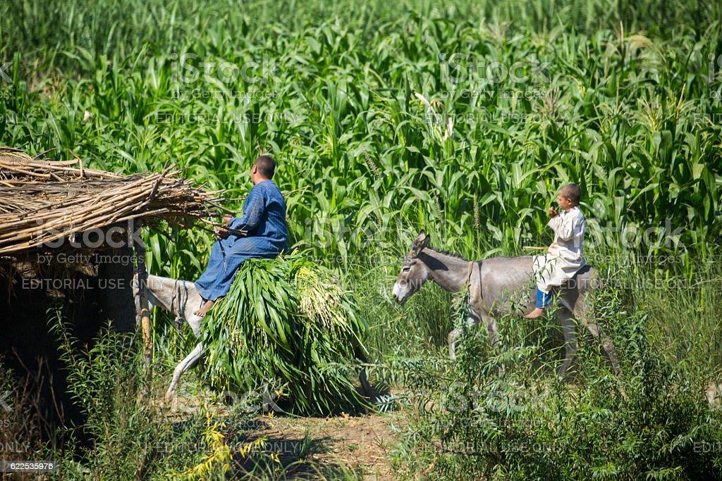 Egypt: Farm stock photo