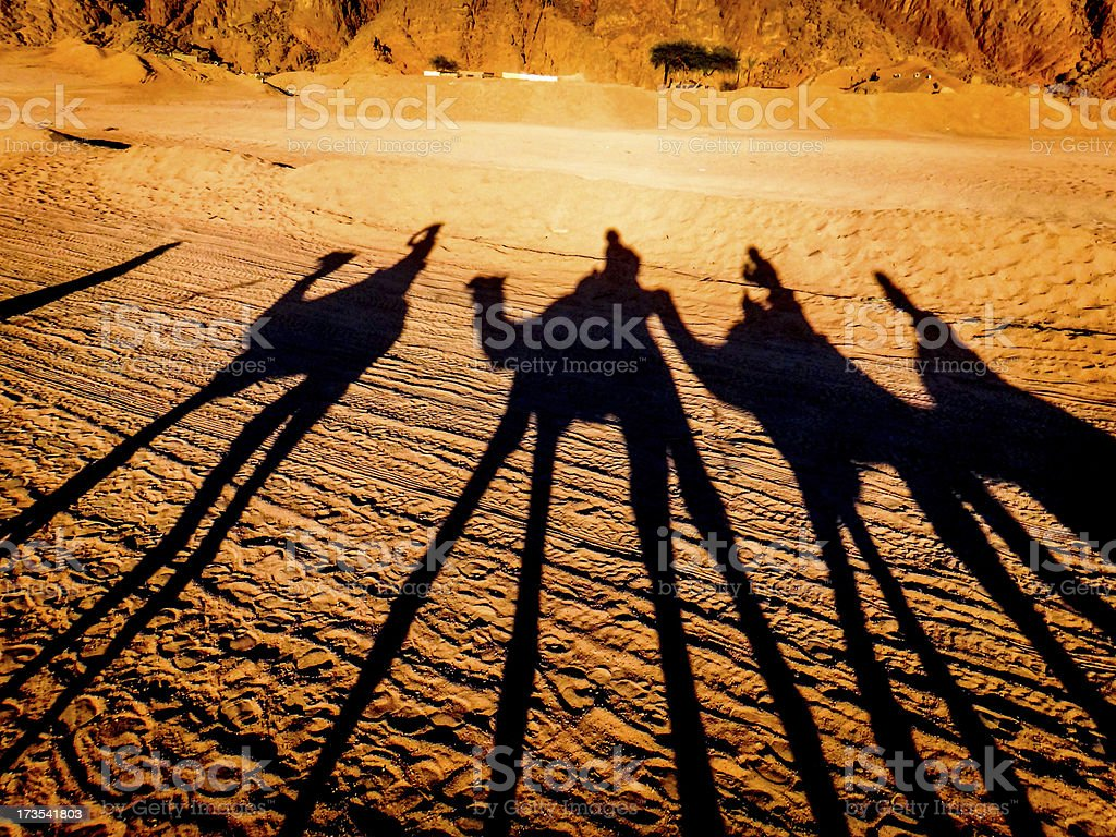 Egypt sunset shadow camels stock photo
