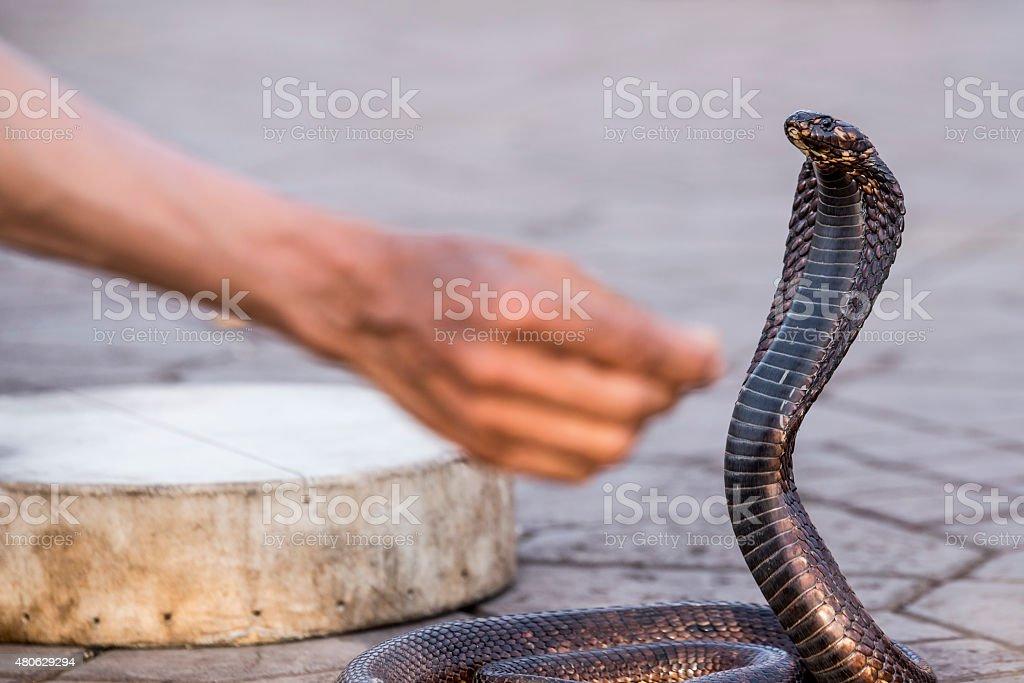 Egyptian cobra charmed at Jemaa el-Fnaa square, Marrakesh (Morocco) stock photo