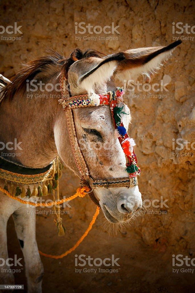 Egyptian donkey royalty-free stock photo