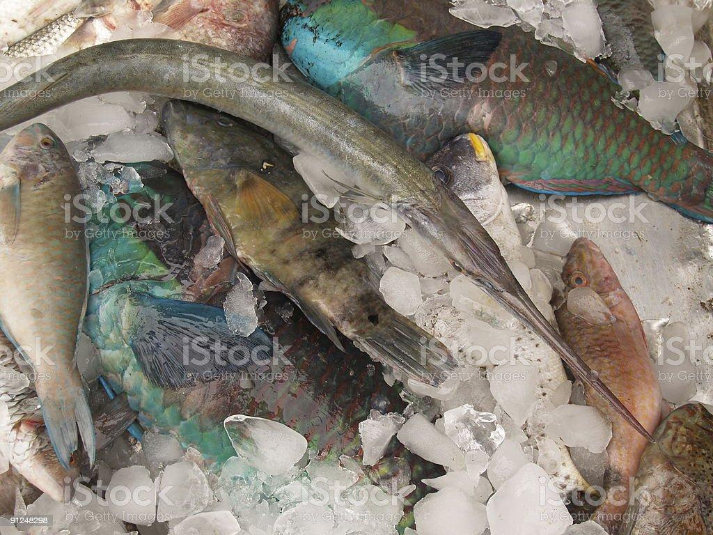 Egyptian seafood royalty-free stock photo